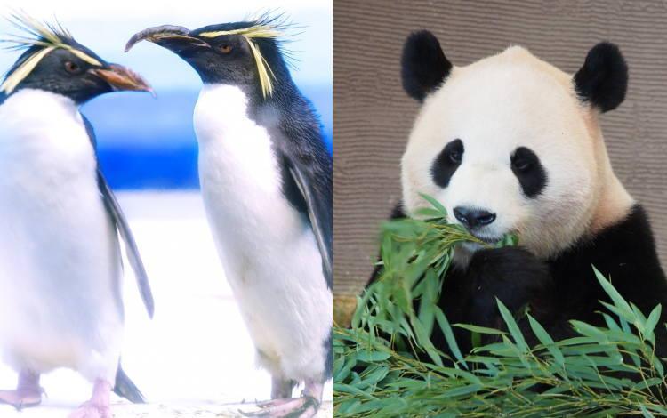 ペンギンアップデート・パンダアップデート