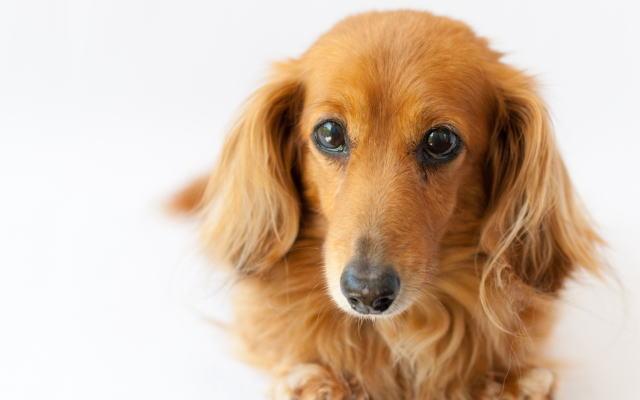 犬イメージ画像