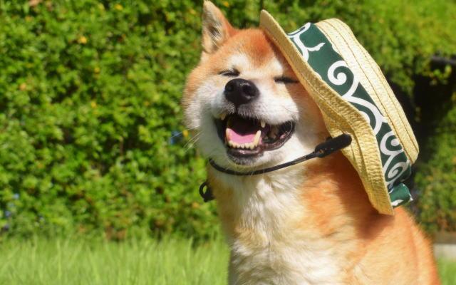 犬専門ブログのイメージ画像