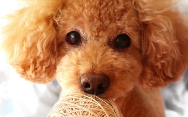 犬関連グッズブログイメージ画像