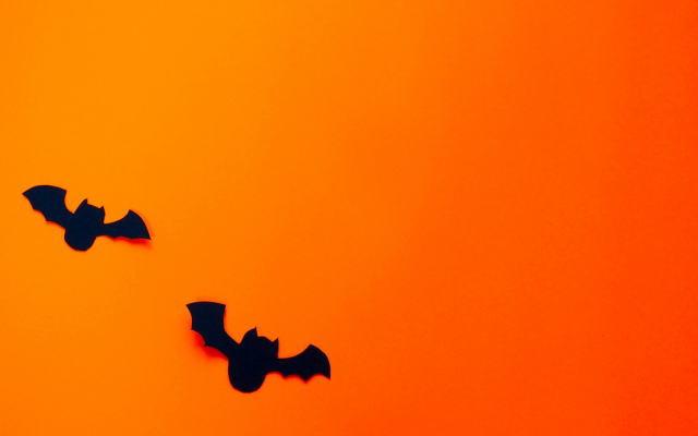 コウモリ退治イメージ画像