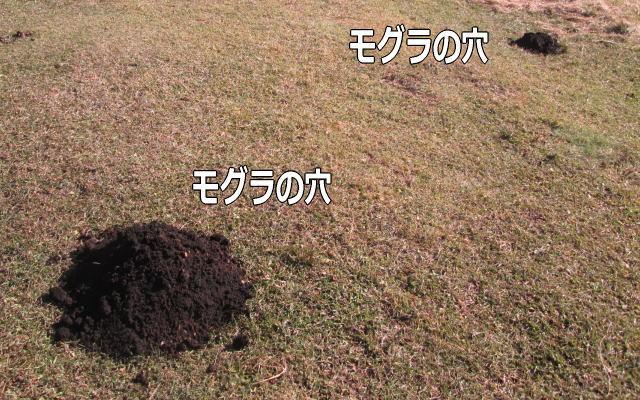 メルマガアフィリエイトの限界=モグラの穴イメージ画像