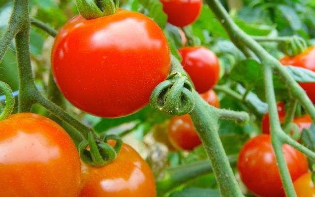 トマトイメージ画像